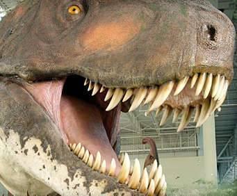 Dinosaur Museum, T-Rex