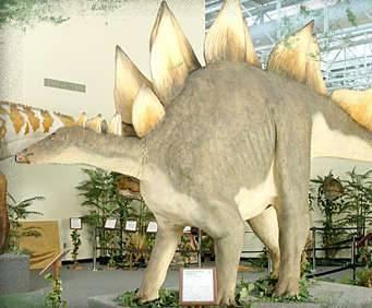Dinosaur Museum, stegosaurus