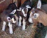 Amish Acres Tour Package