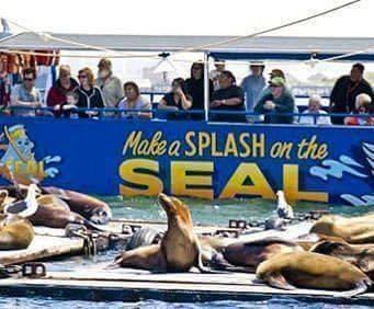 San Diego SEAL Amphibious Sightseeing Cruise, seals sunning