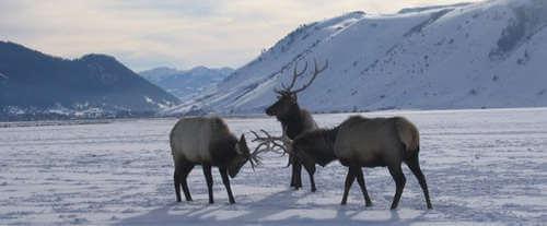 Grand Teton National Park Sunset Wildlife Expedition: Moose