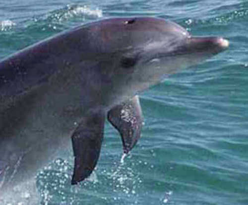 Dolphin Watch and Sea Life Cruise in South Padre Island, Texas, dolphin