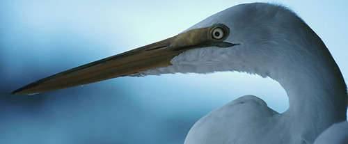 Hiwassee Island Cruises, heron
