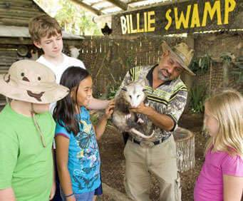 Billie Swamp Safari Buggy Tour, Airboat Ride And Reptile Show, wild animals