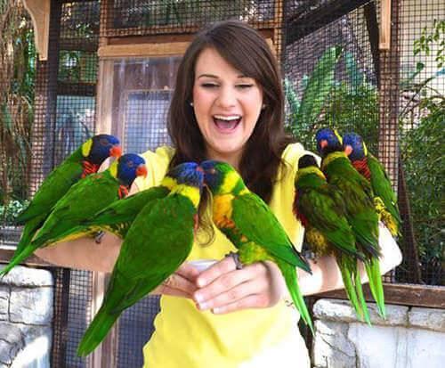 Bird Kingdom Niagara Falls Aviary - Niagara Falls, ON, love birds