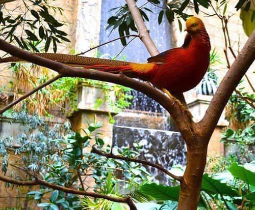Bird Kingdom Niagara Falls Aviary - Niagara Falls, ON, birds