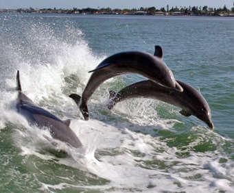 dolphin treasure island florida