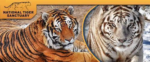 National Tiger Sanctuary - Tigers