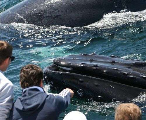 Hyannis Whale Watcher - Barnstable, MA, whale sightseeing