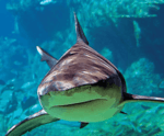 New Orleans Zoo and Aquarium Vacation Package