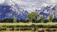 Bison Grand Teton Photo by Daryl Hunter