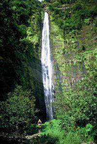 Waterfall and Rainforest Hike