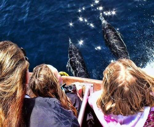 Anaheim Whale Watching Cruise - Blue Whales, Gray Whales, Finback Whales & More, sightseeing