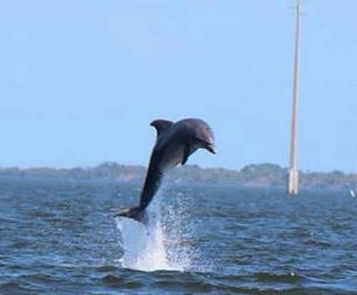 Swim Lessons Merritt Island Fl