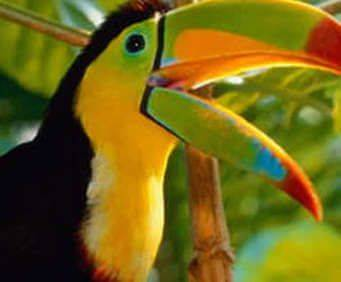 Parrot Mountain & Tropical Bird Sanctuary, toucan