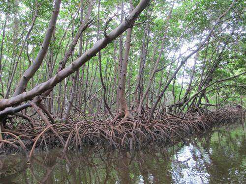 These mangroves are amazing